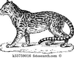 Carnivora Clipart and Illustration. 94 carnivora clip art vector.