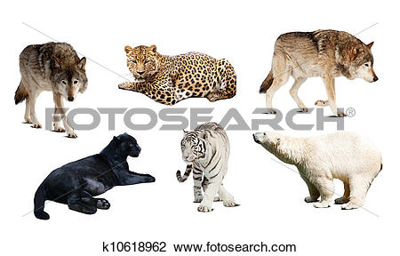 Stock Photo of Set of Carnivora mammal. Isolated over white.
