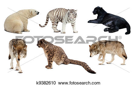 Stock Photography of Set of Carnivora mammal. Isolated over white.