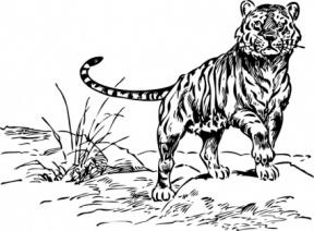 Animals Clipart Of Carnivore.