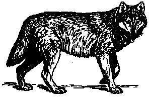 Carnivore Clip Art Download.