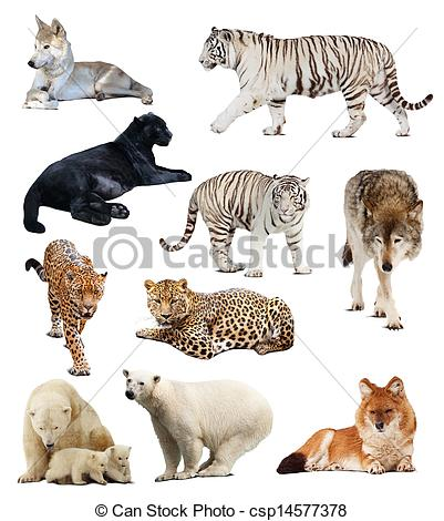 Carnivores Stock Photos and Images. 73,793 Carnivores pictures and.