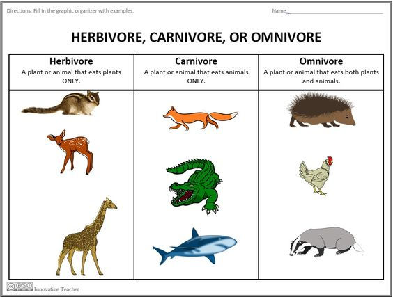 Carnivores clipart 20 free Cliparts | Download images on ...