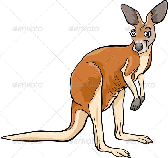 1000+ ideas about Kangaroo Tail on Pinterest.