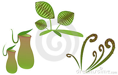 Pitcher plant clipart.