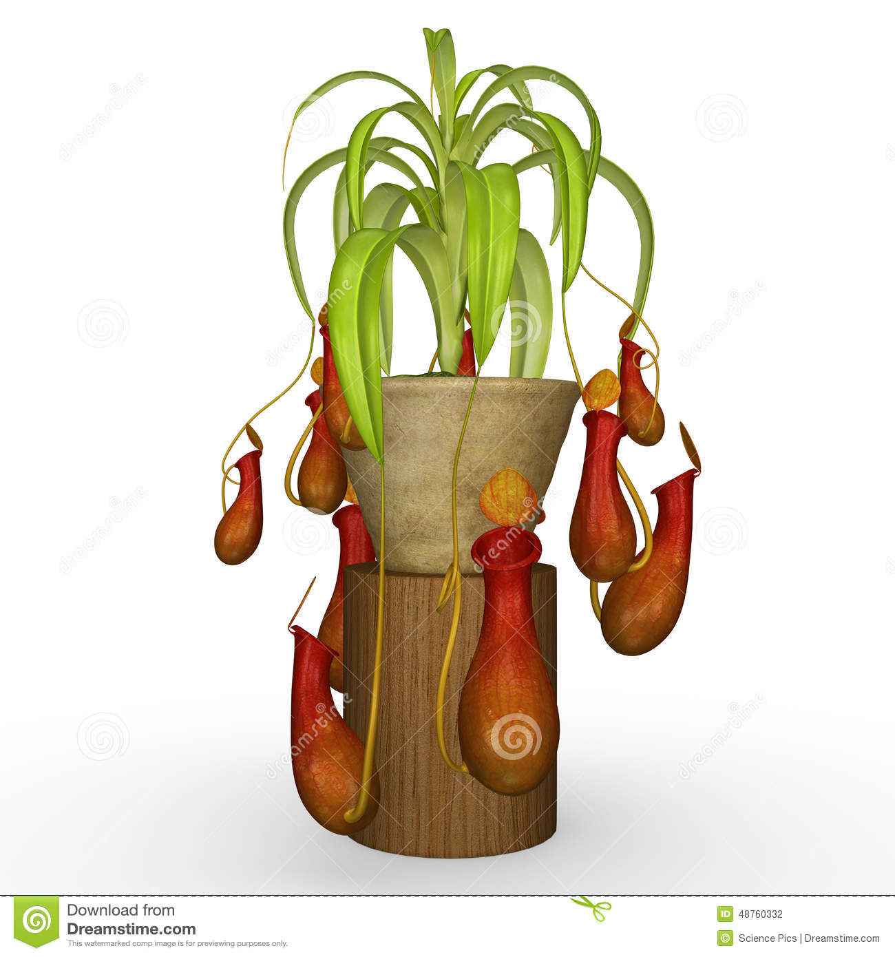 Insectivorous Plants Stock Illustration.