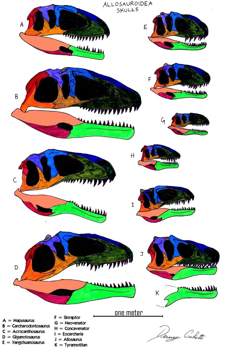 1000+ images about Carnosauria on Pinterest.