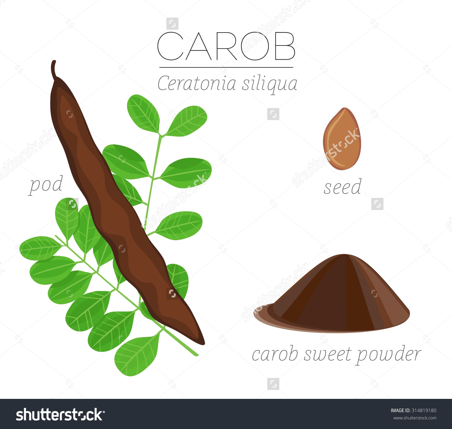 Superfood Carob Vector Set Pod Leaves Stock Vector 314819180.