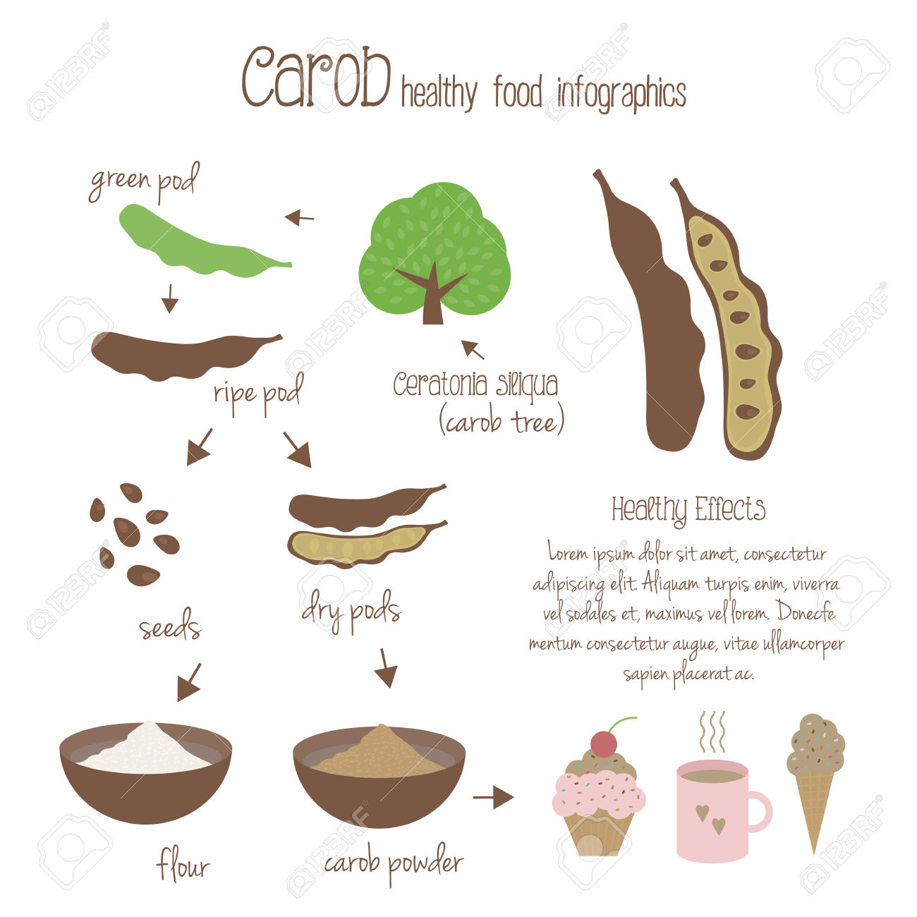 Carob Infographics. Production Of Carob, Use In Cooking. Tree.