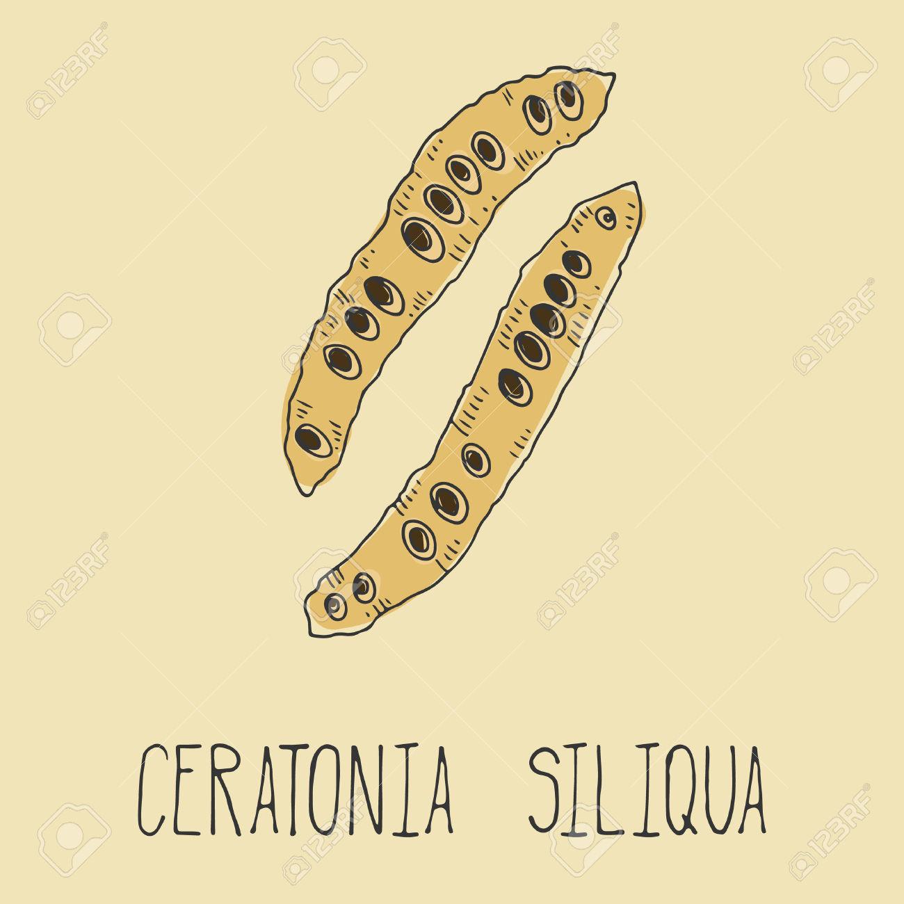 Carob Pods. Ceratonia Siliqua. Vegetarian Decaffeinated Food.