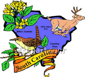 State of South Carolina with State Symbols of Yellow Jasmine.