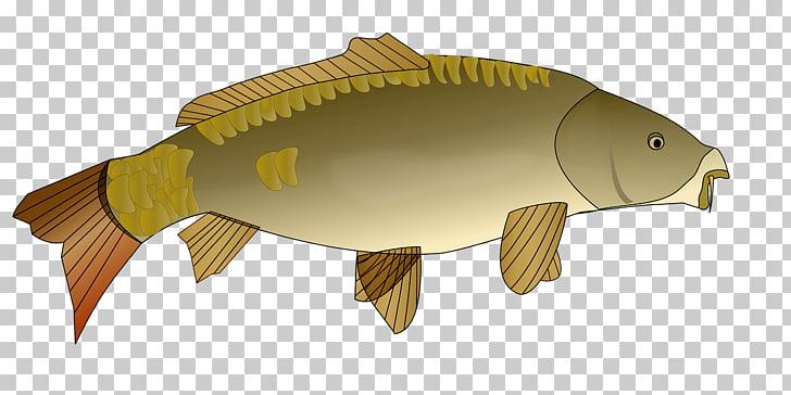 Koi Carp Computer Icons , fish PNG clipart.