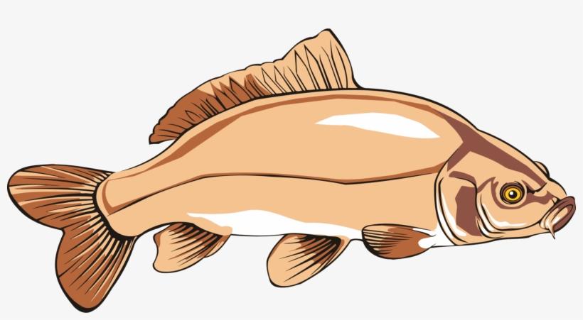 Common Carp Catfish Carp Fishing Free Commercial Clipart.