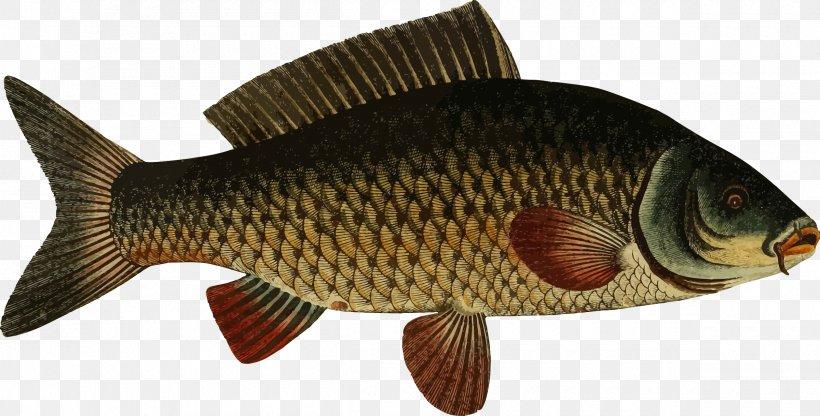 Koi Carp Fishing Goldfish, PNG, 2400x1220px, Koi, Animal.
