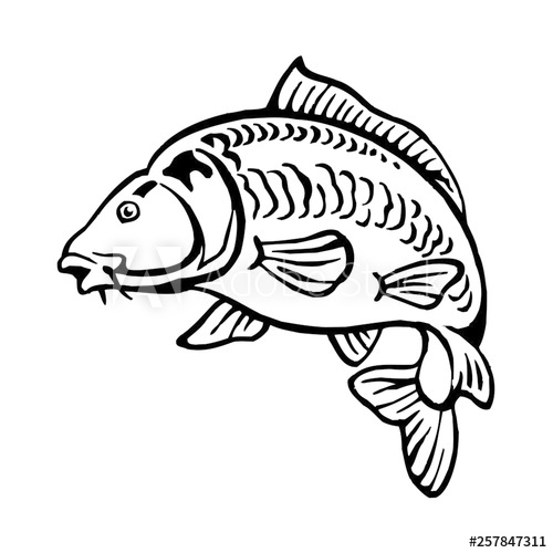 carp fish bald without scales black and white clipart.