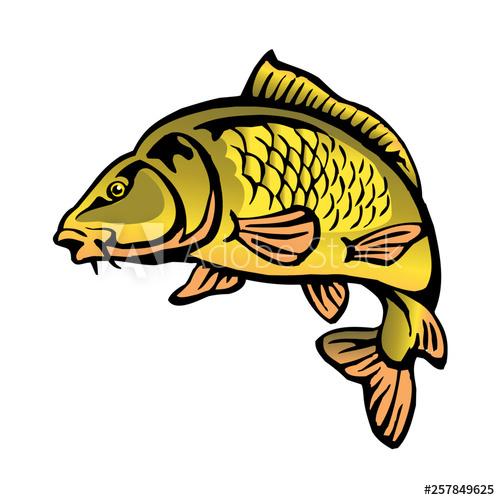 carp fish with fish scales big fish color clipart.