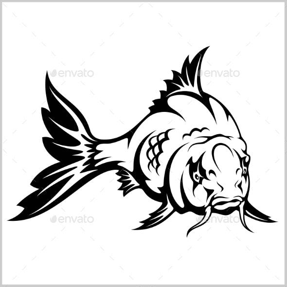 Carp Fish.