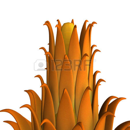 Carpel Stock Vector Illustration And Royalty Free Carpel Clipart.