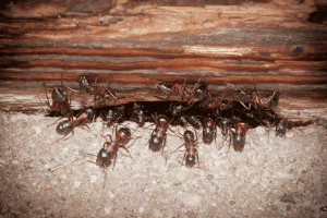 Watch more like Wood Fire Ants In Homes.