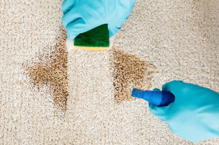 Things to know when searching for a Secured Carpet Cleaning for Pets.