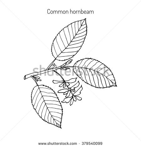 European Flora Stock Vectors & Vector Clip Art.