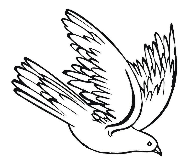 Racing pigeon clipart.