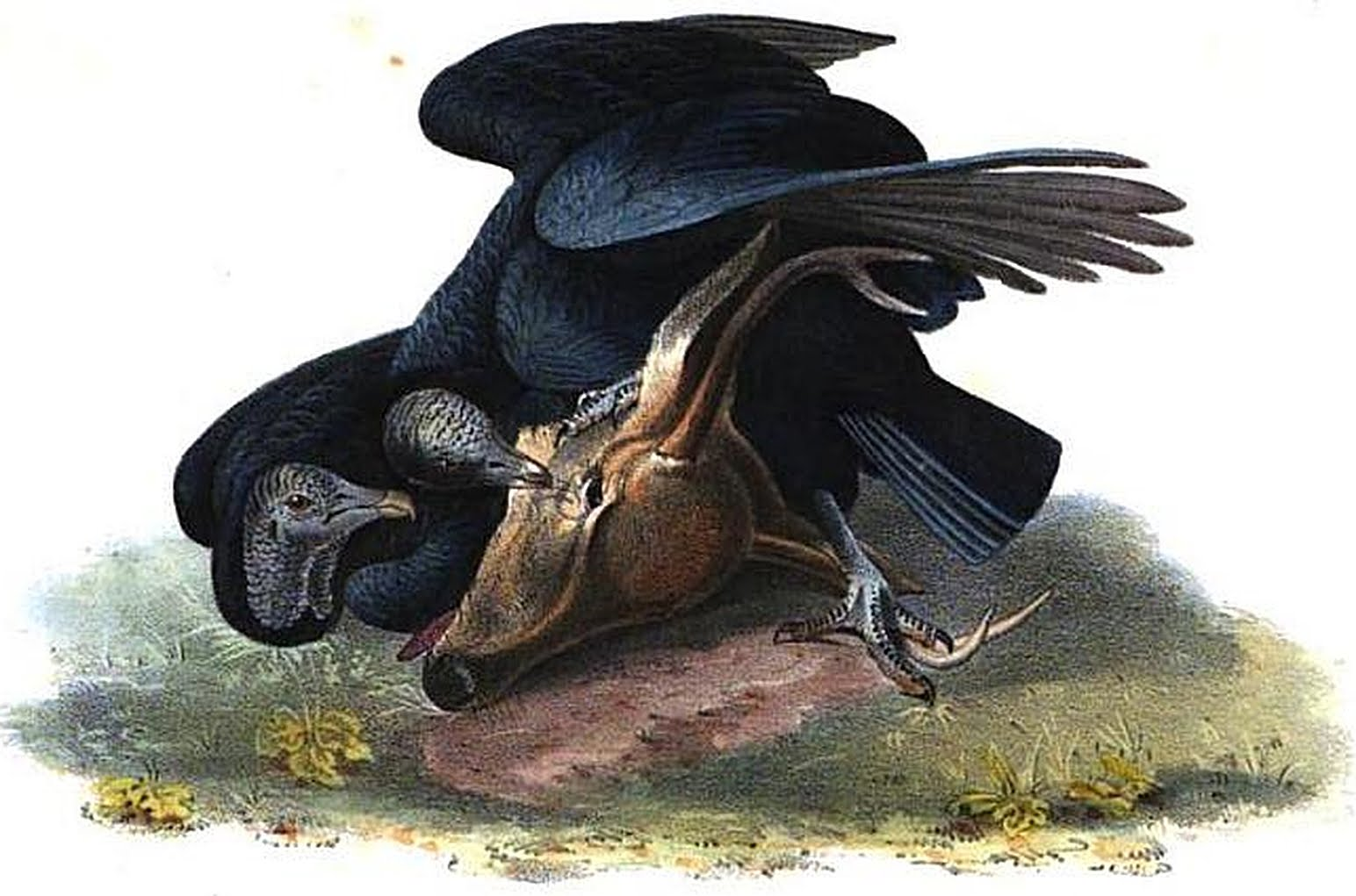 Carrion Cliparts.