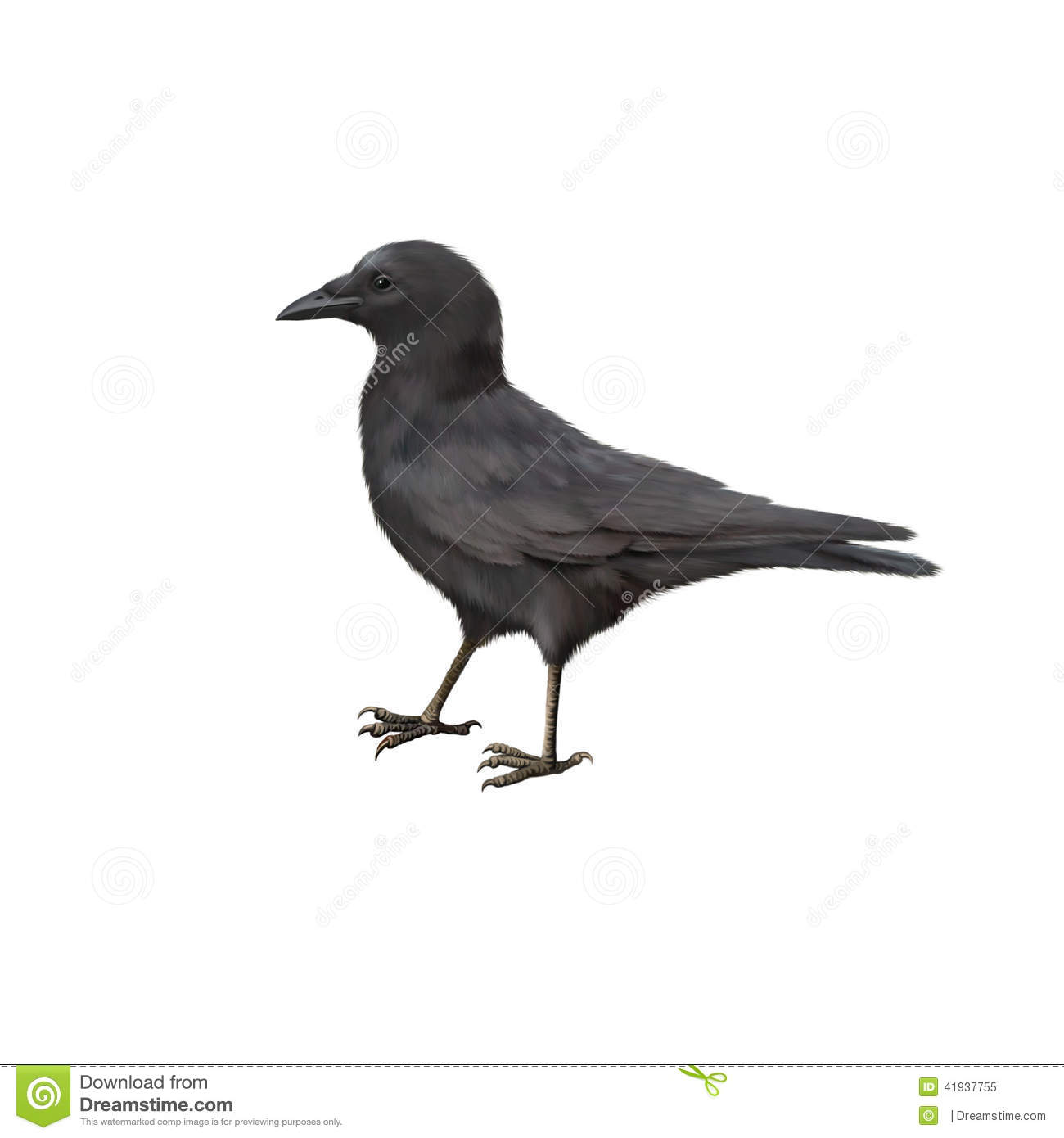 Side View Of A Carrion Crow, Corvus Corone Stock Illustration.
