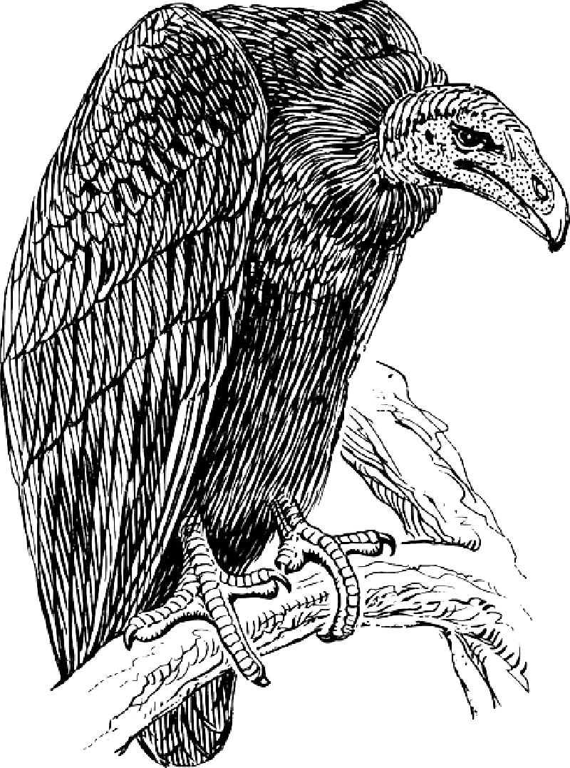 Carrion eater clipart #4