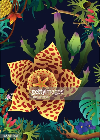 Carrion Flower In The Jungle Vector Art.