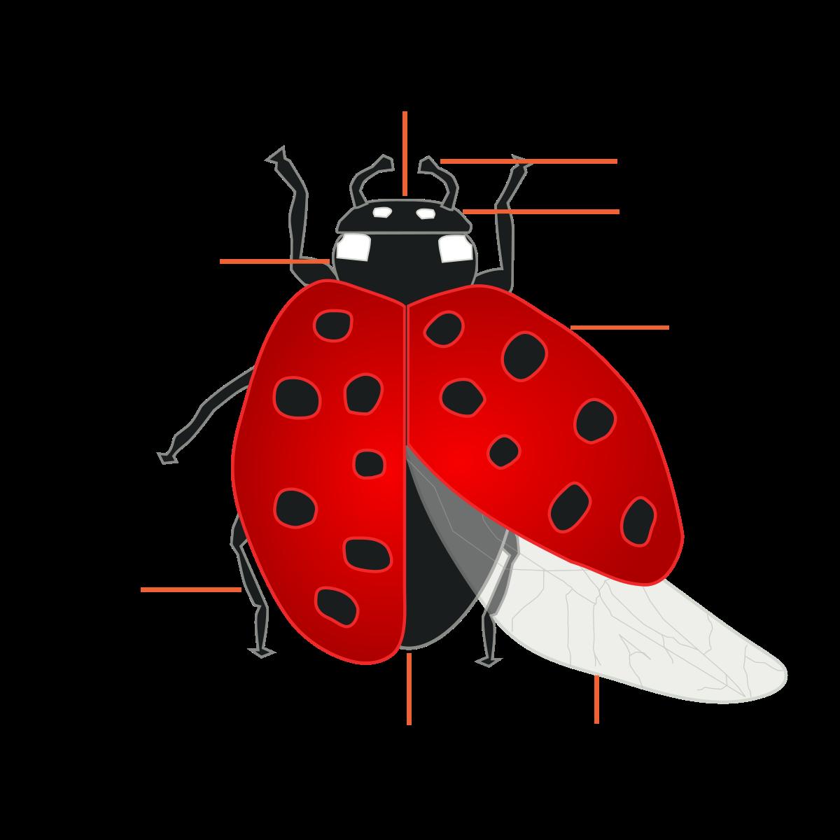Forensic entomology.