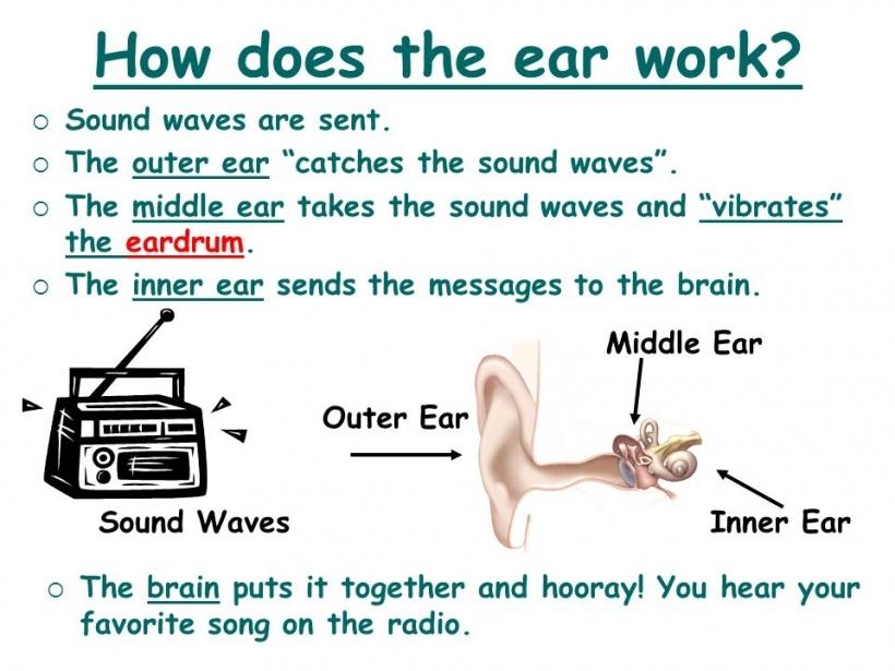 ear sound waves clipart ear sound waves clipart hearing sound.