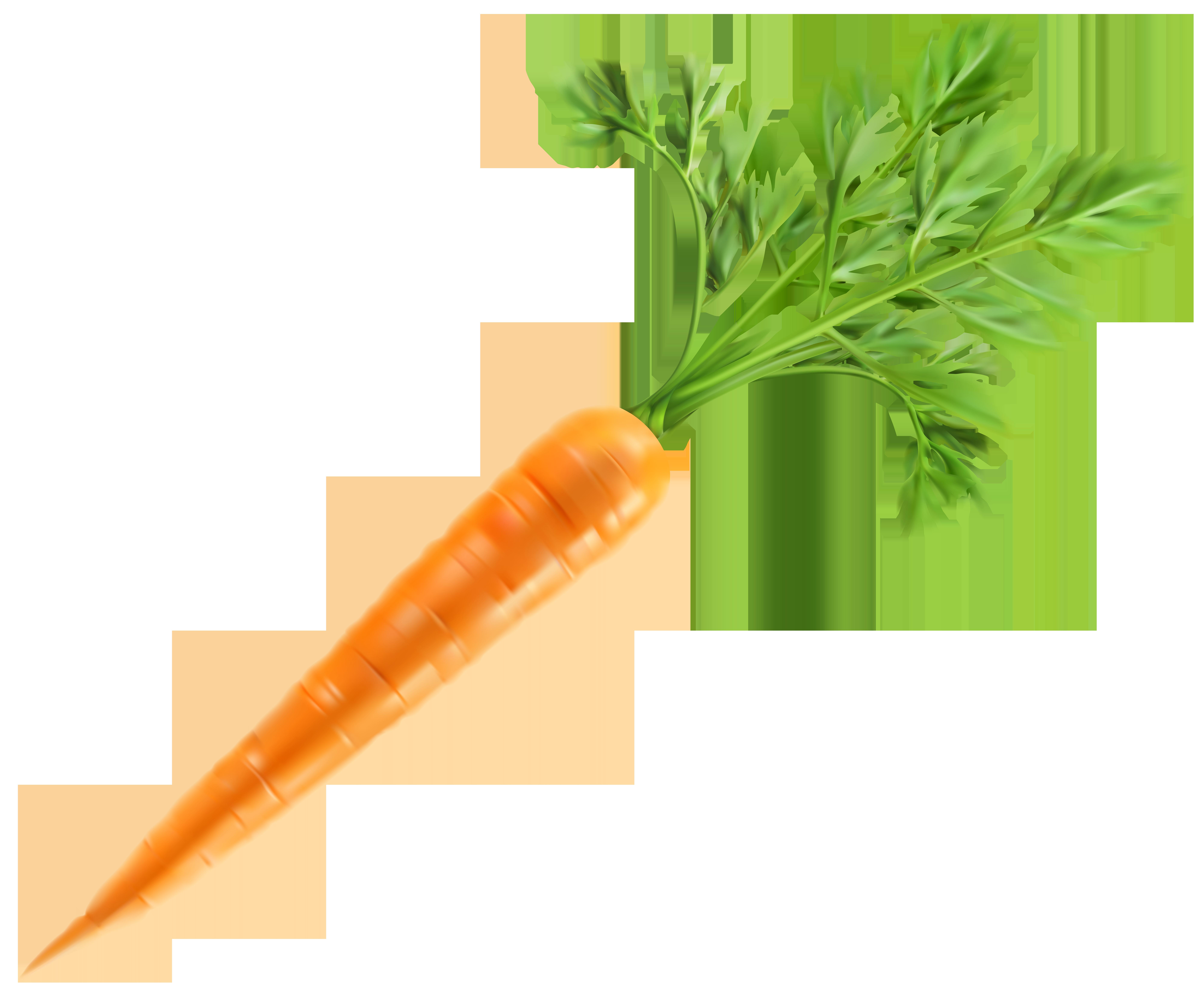 Fresh Carrot PNG Clip Art Image.