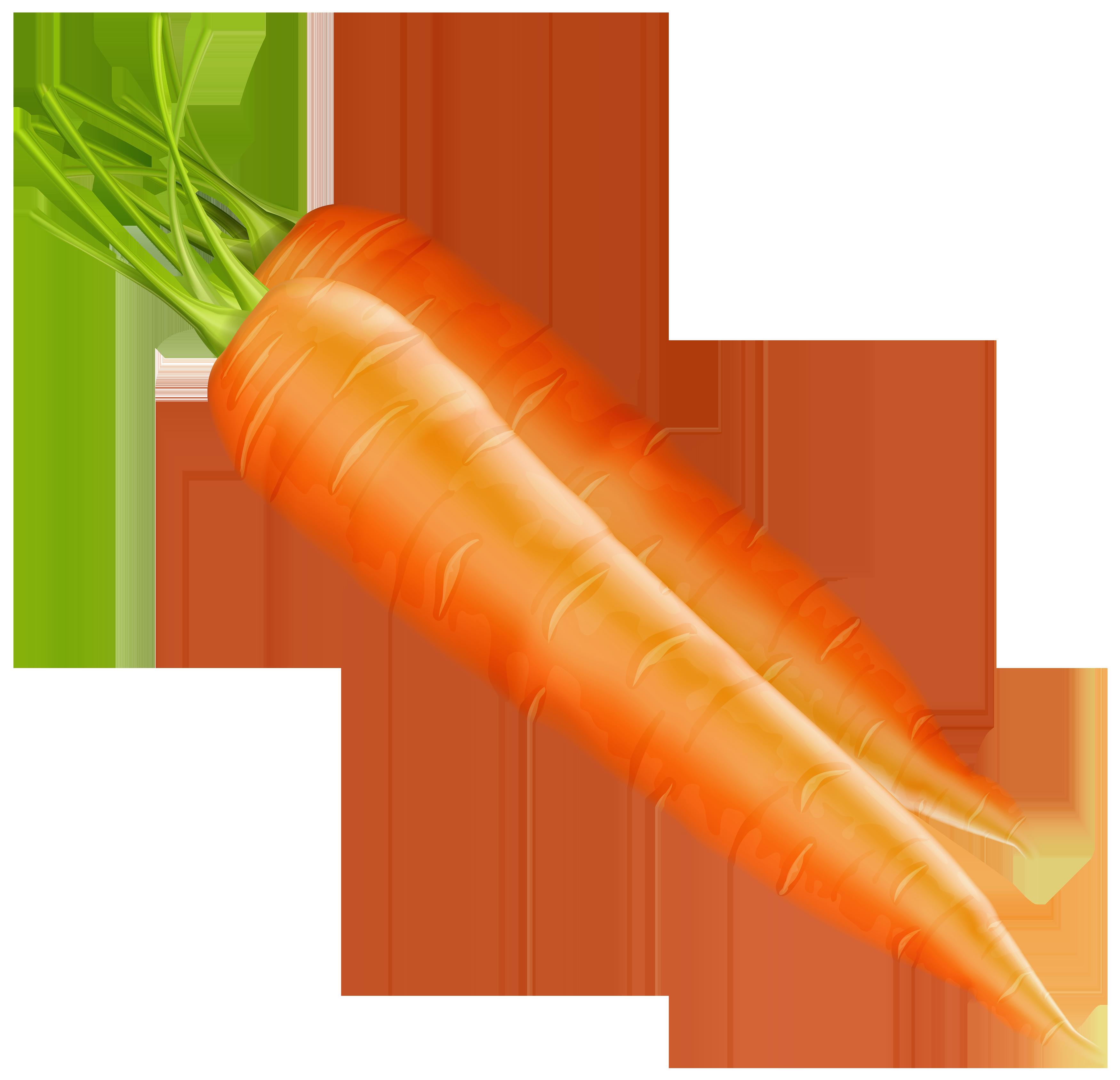 Carrots PNG Clipart.