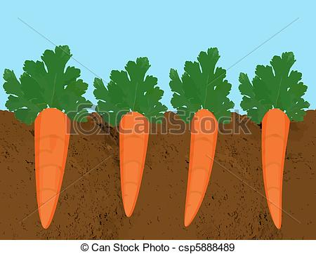Carrot Plant Clipart #1.
