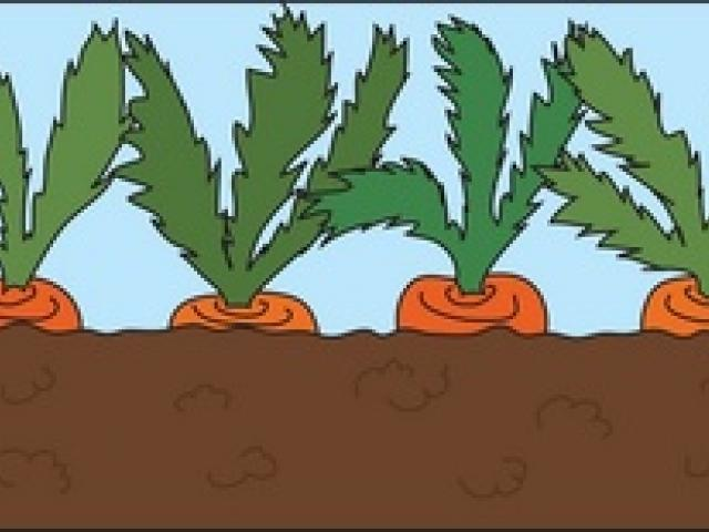 Free Carrot Clipart, Download Free Clip Art on Owips.com.