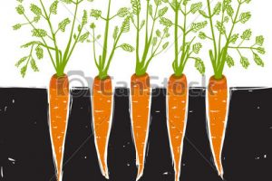 Carrot plant clipart 1 » Clipart Station.