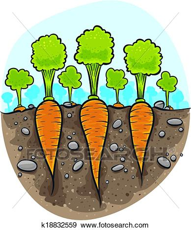 Carrot plant clipart 7 » Clipart Station.