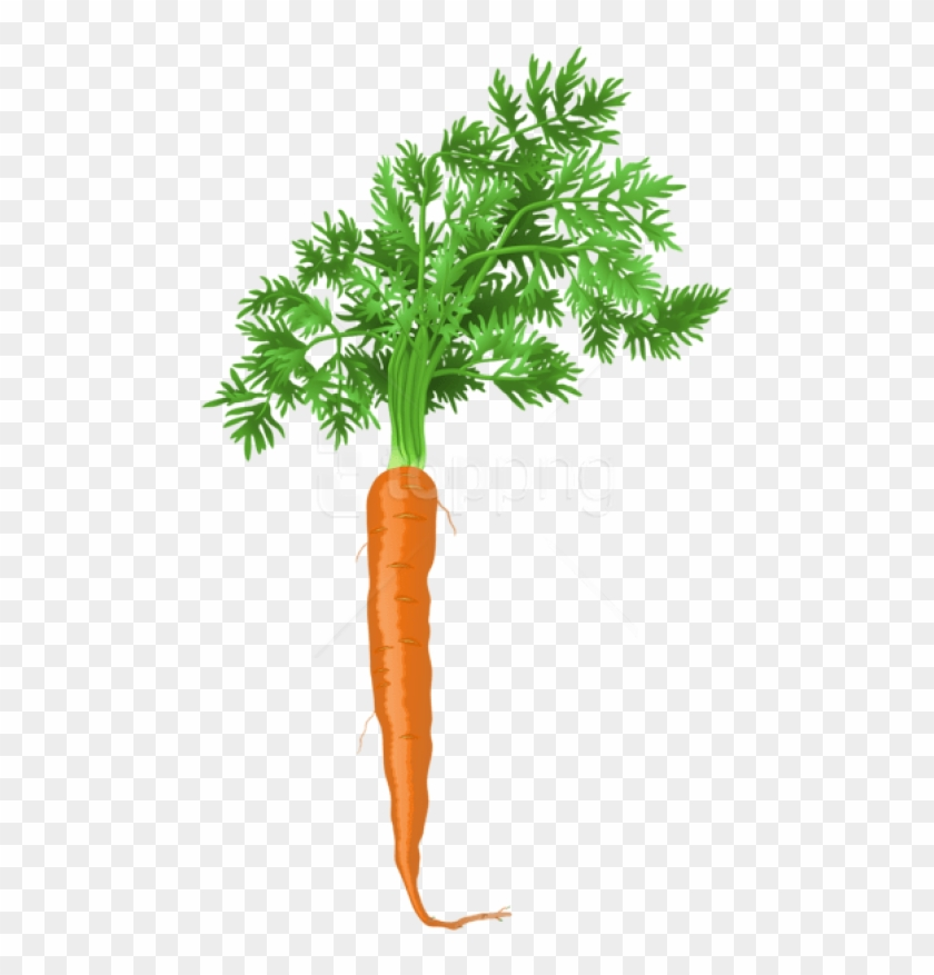 Carrot Png Png.