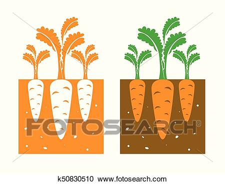 Carrot plant Clipart.