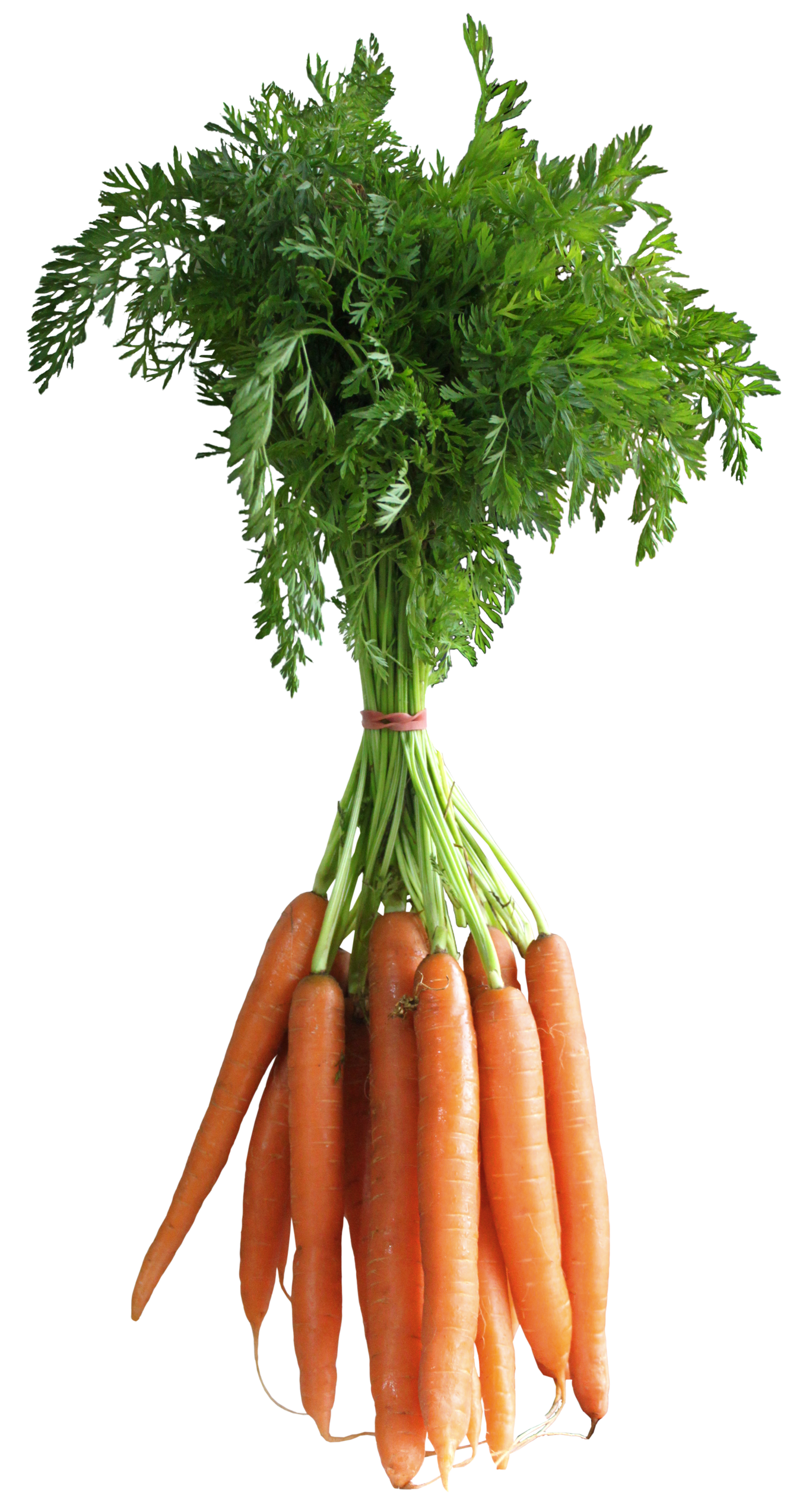 Carrots PNG Clipart Picture.