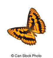 Pictures of Sleeping Chequered skipper (Carterocephalus palaemon.