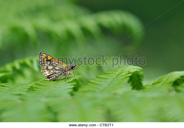 Scarce Butterfly Stock Photos & Scarce Butterfly Stock Images.