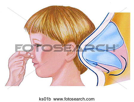 Nasal cartilage Clipart and Stock Illustrations. 16 nasal.