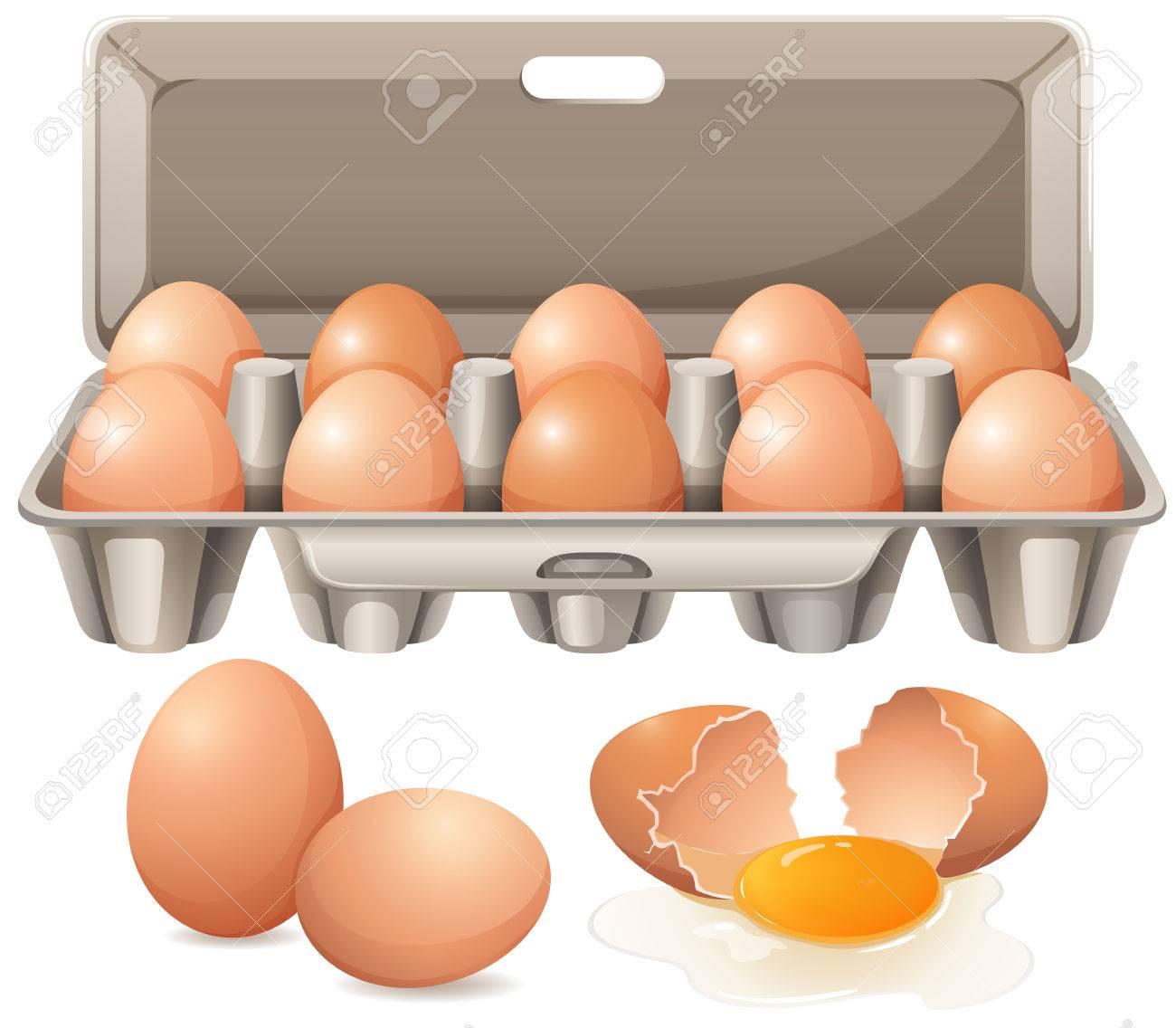 Carton of eggs and raw egg yolk illustration.