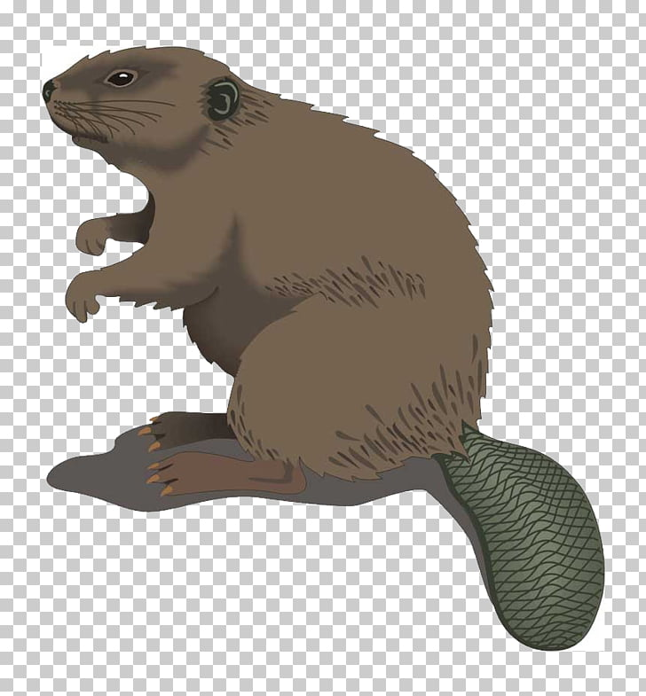 Beaver Cartoon , beaver PNG clipart.