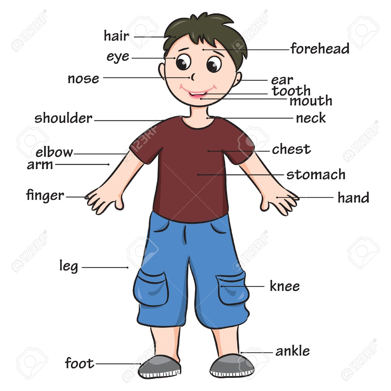Cartoon child Vocabulary of body parts.