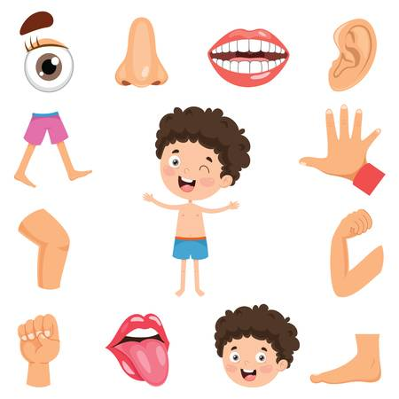 7,733 Body Parts Cartoon Stock Vector Illustration And Royalty Free.