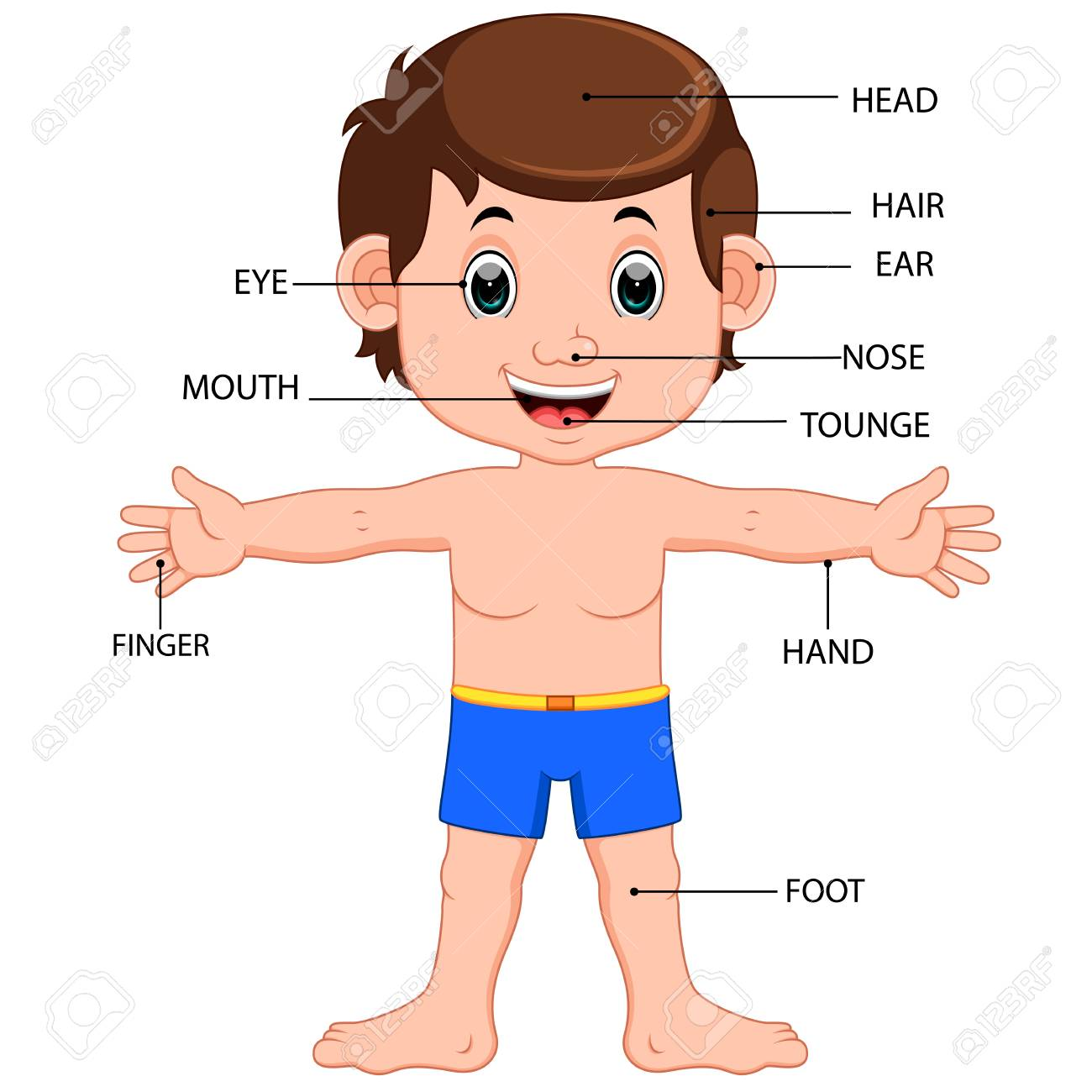 boy body parts diagram poster.