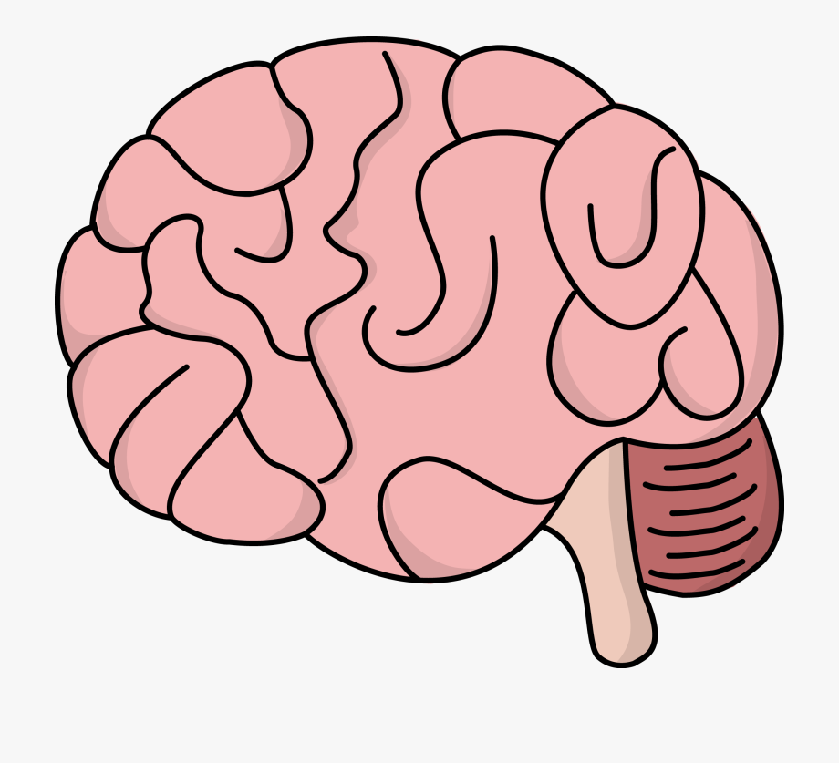 Image For Free Brain Health High Resolution Clip Art.